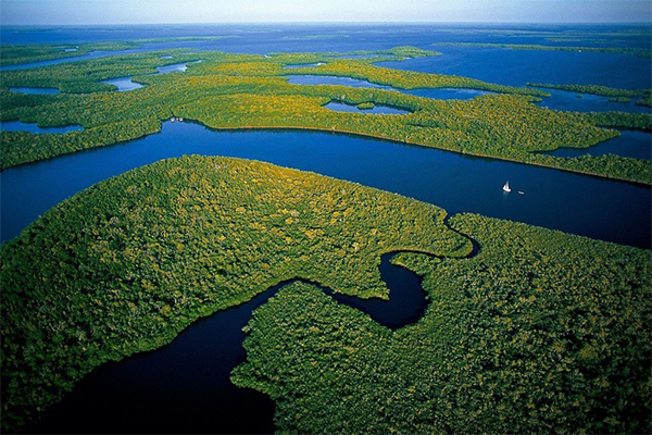 Aerial of Everglades National Park