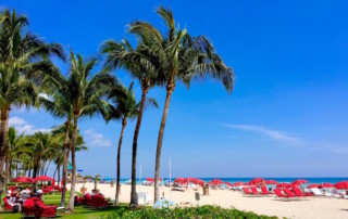 Palm trees and lounge chairs on the beach on a bright blue skied day