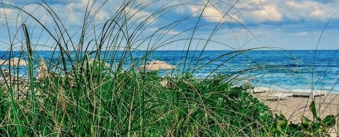 View of the ocean and beach through the seagrass