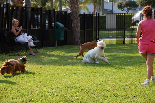 Dog Park Bone Zone at Senator Gwen Margolis Park